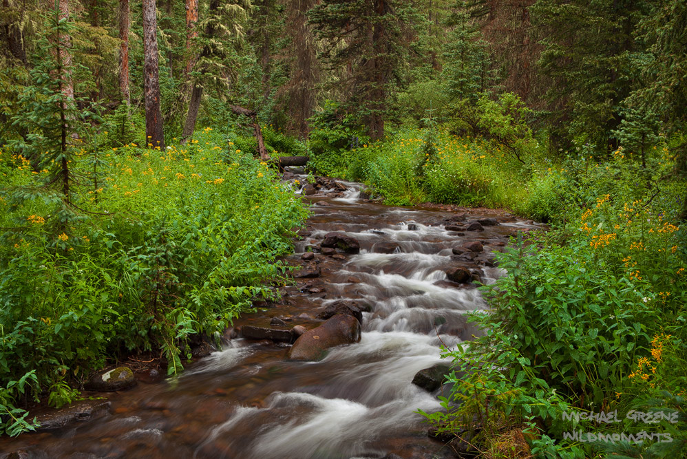Prolific foliage decorates a picturesque creek in the South San Juan Wilderness located in South Central Colorado.