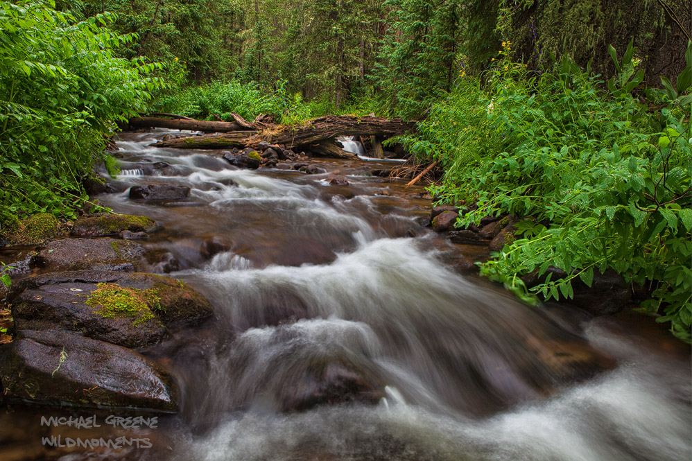 A tricky bushwack through deep, wet foliage was required to make this image of an unnamed creek in the South San Juan Wilderness...