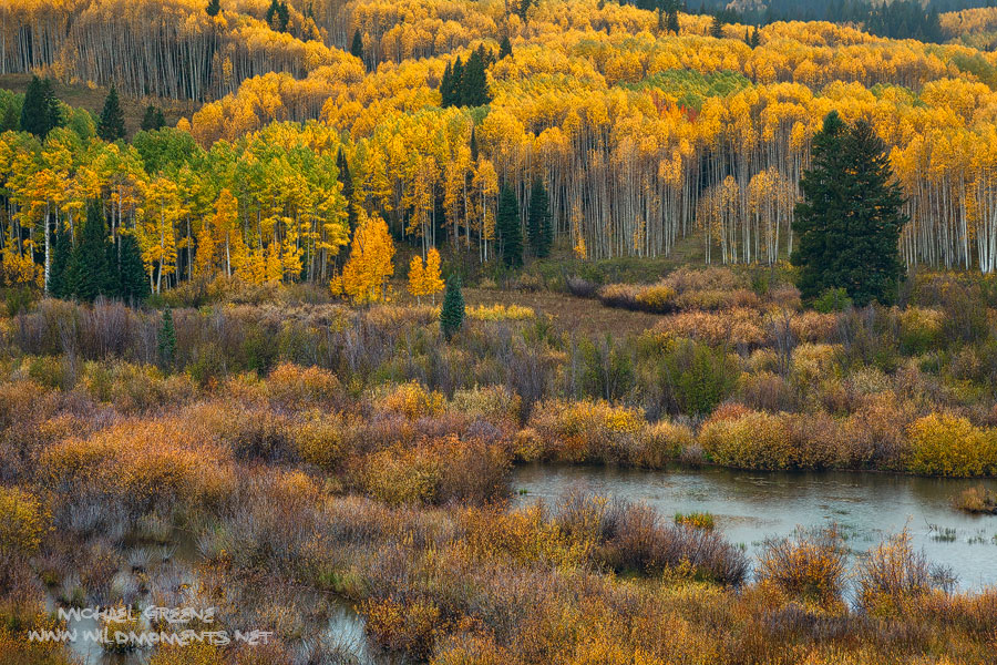 A rainy afternoon view of the wetlands and forest surrounding Kebler Pass Road near the mountain town of Crested Butte, CO.