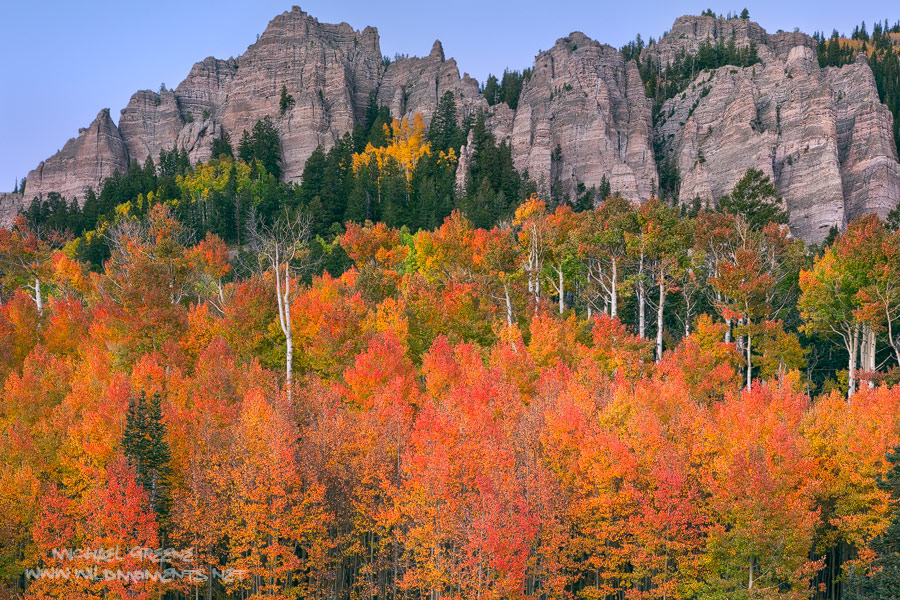 Towering cliffs hoover above a glowing grove of aspens during peak fall foliage in the Uncompahgre National Forest in SW CO near...