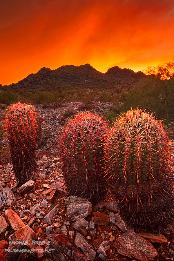 Incredible storm light illuminates the sky a bright orange red at sunset in the Phoenix Mountain Preserve in Central Phoenix...