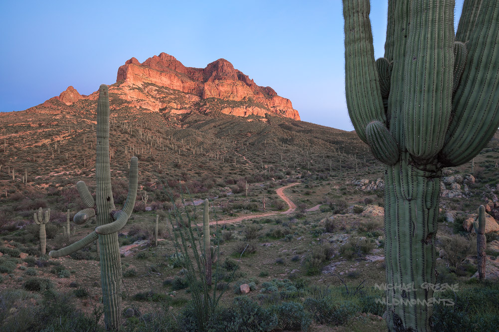 Blue hour glow amid saguaro and rock formations near Boyce Arboretum State Park. This mountain islocated near the...
