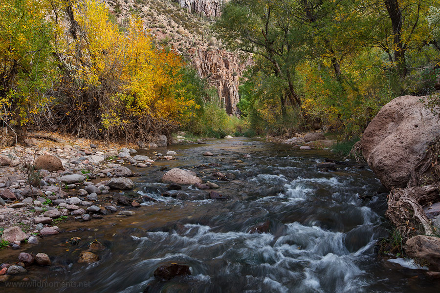 The early stages of fall come late to the western portion of Aravaipa Canyon located in Central Arizona near Seligman.