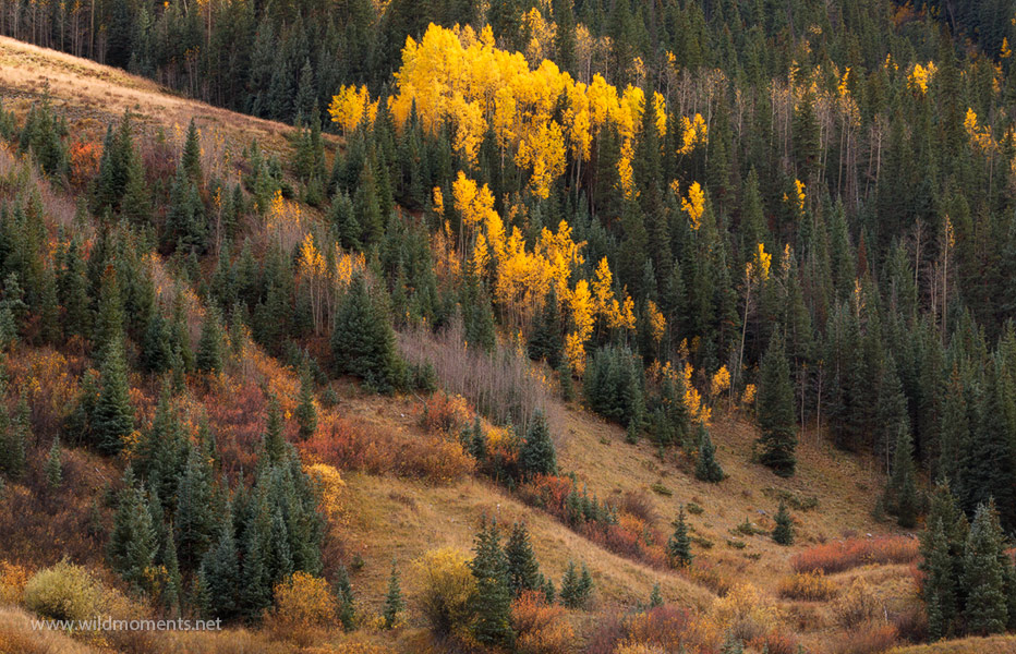 Hints of color in the mountain grasses near Silverton, CO mixed with pockets of gold allowed for some creative autumn photography...