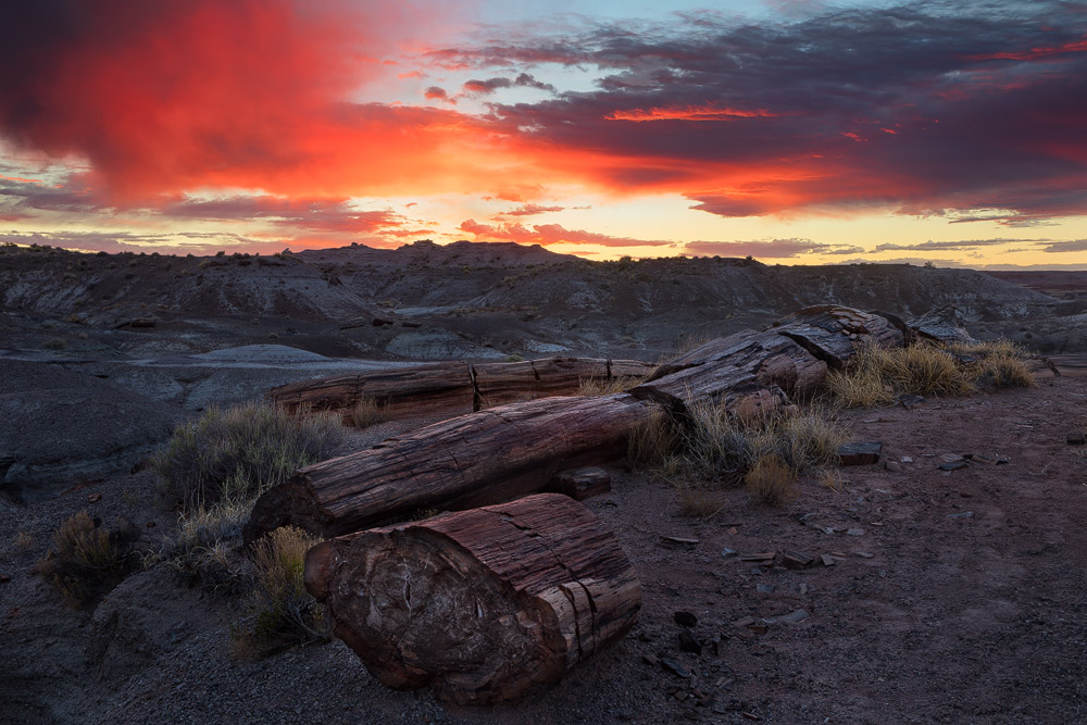 A stormy sunrise produced fiery color over the black forest and painted desert areas of the Petrified Forest National Park near...