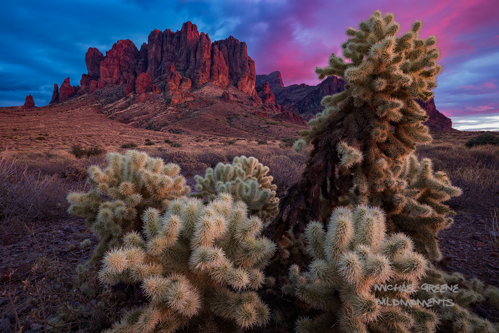 I captured this shot of a spectacular, yet fading sunset framed with chollas after hiking to the Flatiron Summit along the Siphon...