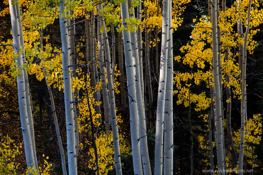 A small, hidden valley is accentuated by color and pattern as fall begins to show its color while light reaches the aspen trees...