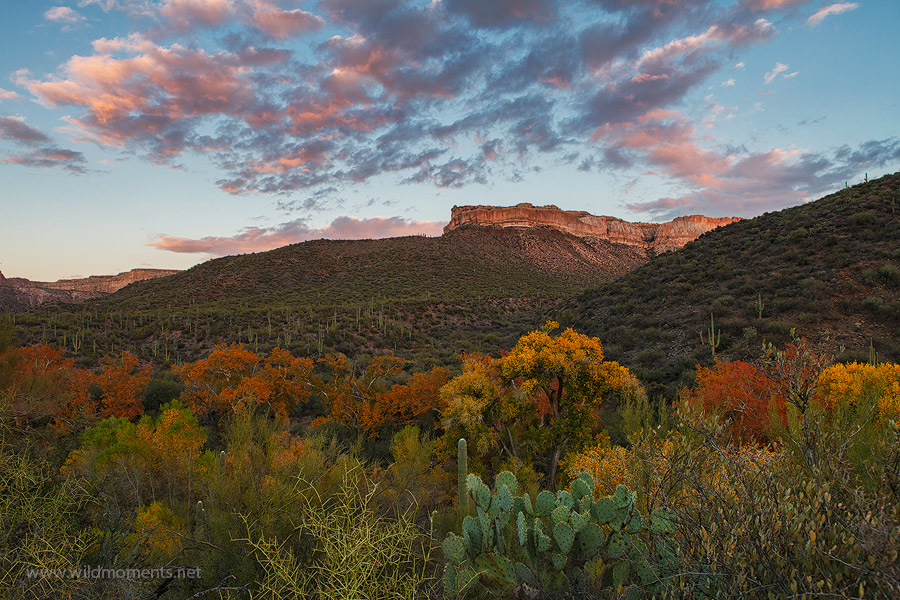 Prolific autumn foliage and a picturesque sunset compliment the deep canyon wilderness of Aravaipa Creek.