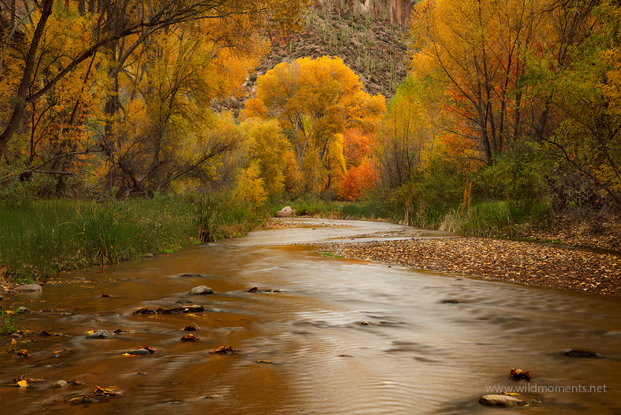 Prolific autumn colors (at least for Arizona) decorate the water's edge in the Aravaipa Canyon Wilderness. This wilderness is...