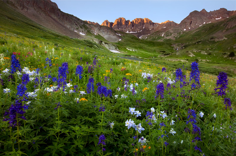 Colorado Columbine and Penstemon dominate the foreground in a flower filled lower meadow, while the 13, 800 foot peaks of American...