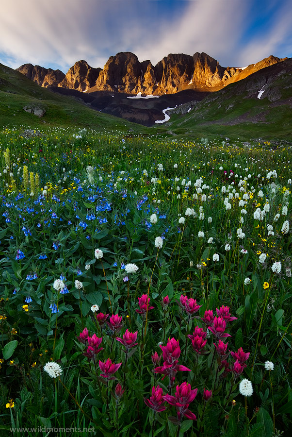 A stunning floral display of indian paint brush, bluebells, and bear grass accentuated by a glimpse of rare alpine light in American...