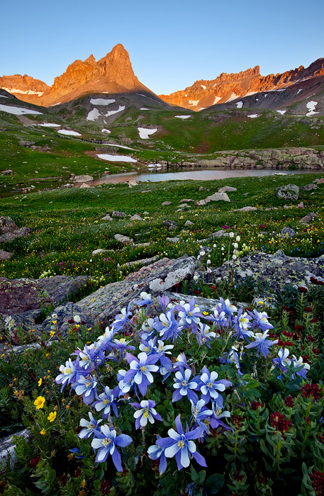 """Alpenglow and Colorado Columbine set amidst the backdrop of a 13,750 ft. peak called the """"golden horn"""" deep in the..."""