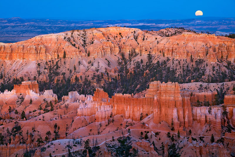 Ambient sunsetlight glows on the hoodoos, spires, and pinnacles in Bryce Canyon UTwhile an incredibly orangish-yellow...