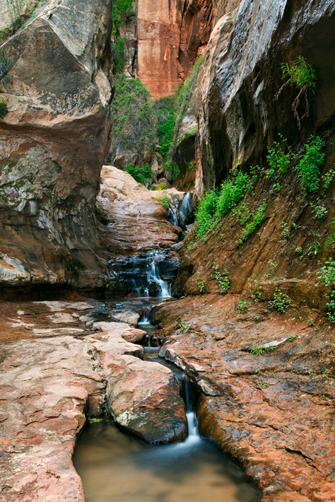 Sculpted slick rock, lush foliage, and springs of water await the adventurous traveler who takes a trip to the forbidden land...