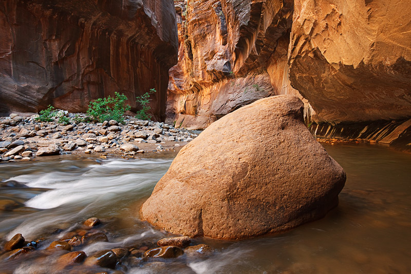 An early afternoon glow illuminates the sides of Zion National Park's Virgin River Narrows. The large boulder in the river is...
