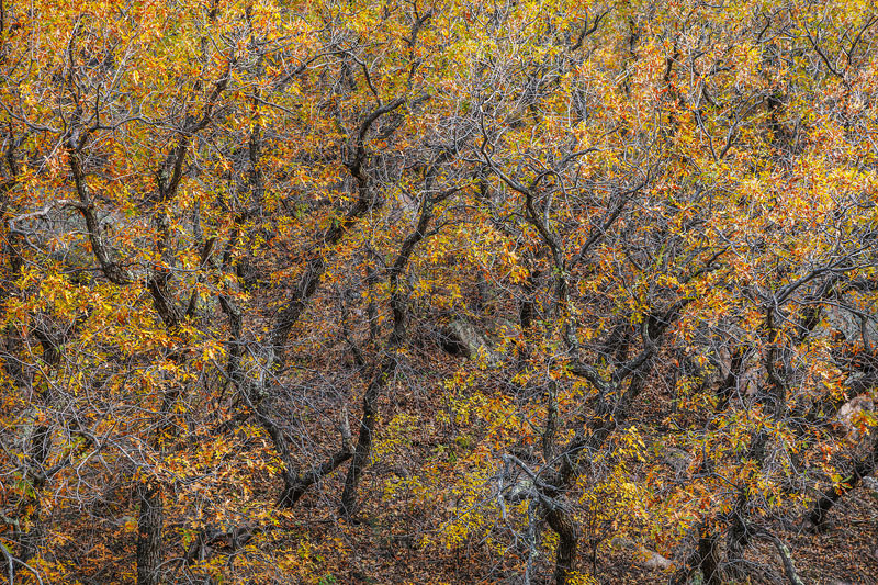 A rare canyon of peak foliage creates a uniquenatural abstract in the upper reaches of the Chiracuhua Mountains in Eastern...