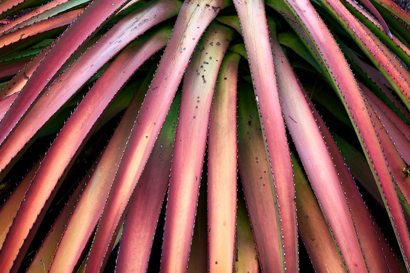 Some of the greatest specimens of desert foliage in the Southwest are on display in the Chiracuhua Mountains in Southeastern...