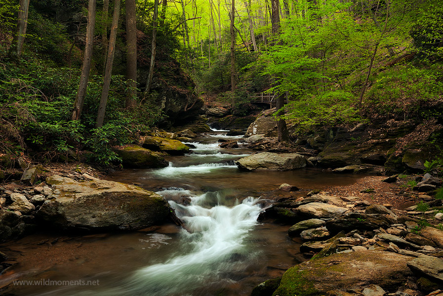 This image shows the most scenic section of Pequea Creek nestled in a rugged, remote and deep gorge just outside of Lancaster...