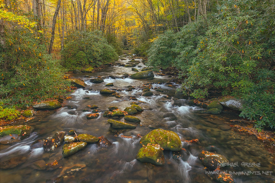 I captured this autumn view from a bridge while crossing Rowland Creek trail in the mid morning. The trail is located near Bryson...