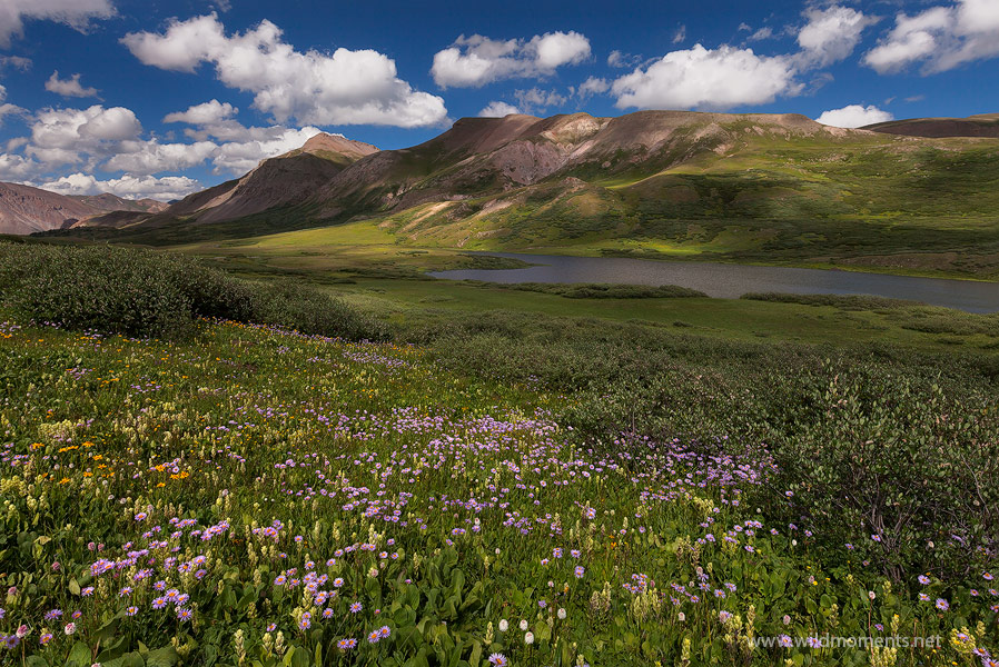 An amazing scene of aster, paintbrush, bear grass, and sneezeweed frame the foreground around Cataract Lake - bathed in the dappled...