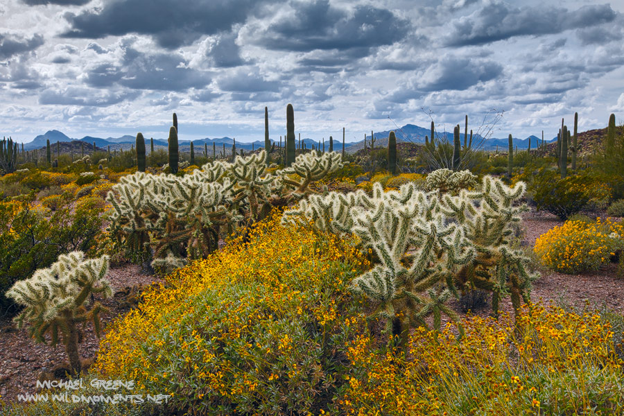 Deep views into Mexico are afforded in parts of Organ Pipe Cactus National Monument in Southern AZ.