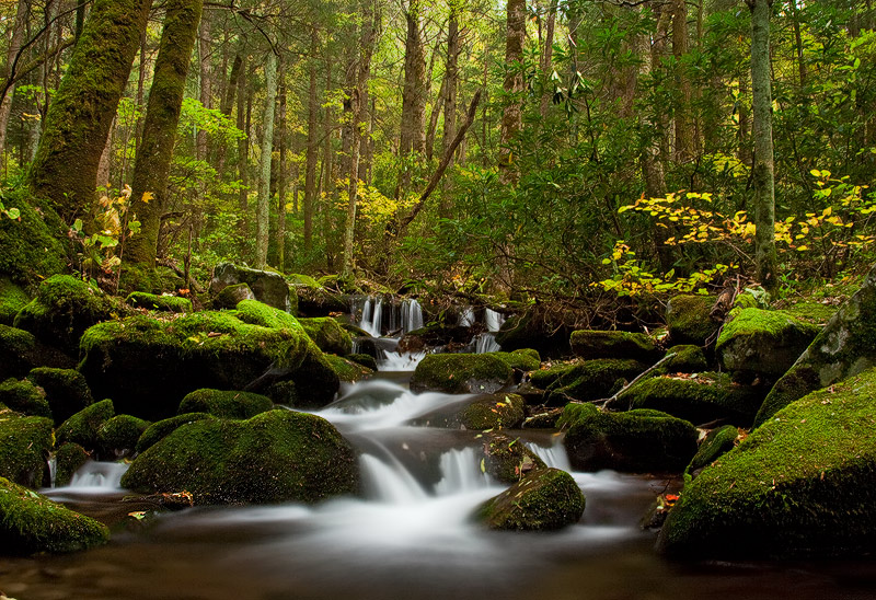 An ancient growth forestoverlooks cascading waters as fall colors subtly accent another lushsignature Smoky mountain...