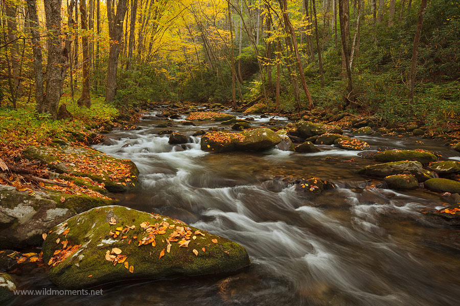 An iconic autumn image of a soothing and scenic section of Rowland Creek. This area is located outside of Bryson City, NC and...