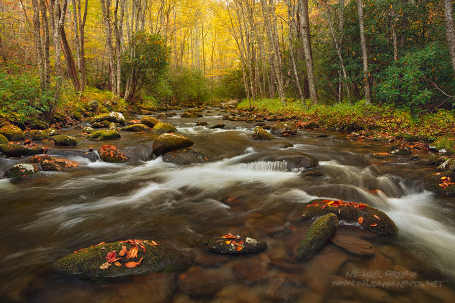 I had to get my feet wet for this particular autumn image and the water was ice cold. You are looking at Rowland Creek located...