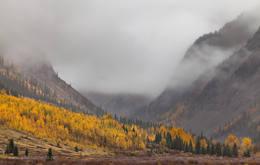I was reminded of Yosemite National Park when photographing this autumn scene of ridge lines draped in the fog with golden trees...