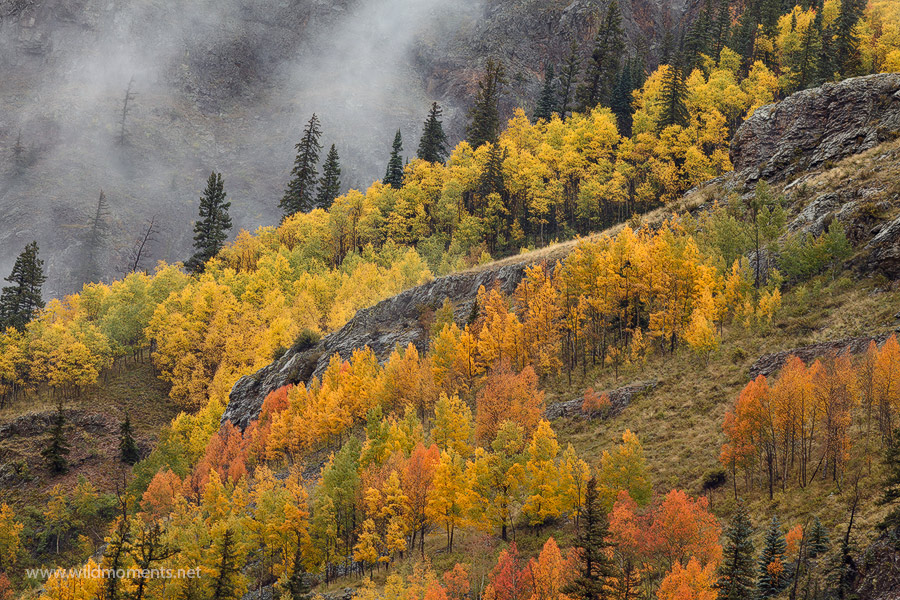 I was fortunate to capture peak fall colors with mist rising from the mountains during my 2014 autumn visit to Silverton, CO.