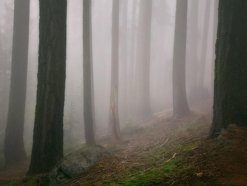 Dense fog penetrates a dark forest as night falls near the Sierra Trail outside of Crabtree Meadow.