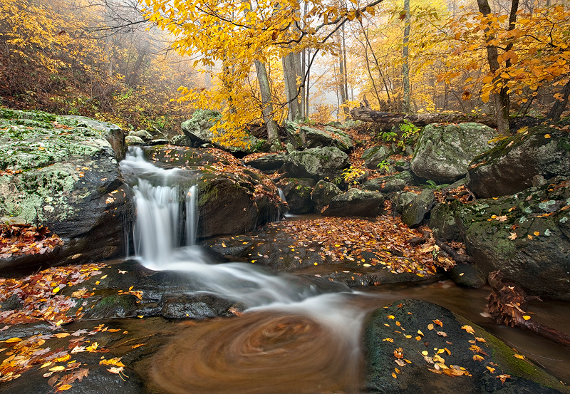 Fall colors come to life as the rain and fog roll in ona typicalblustery day in Shenandoah. This was taken in the...