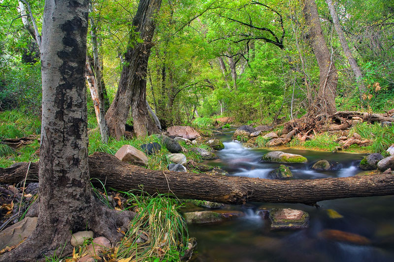 Streams truly come alive in the Fossil Springs Wilderness where underground springs pump out water at a rate of 20,000 gallons...