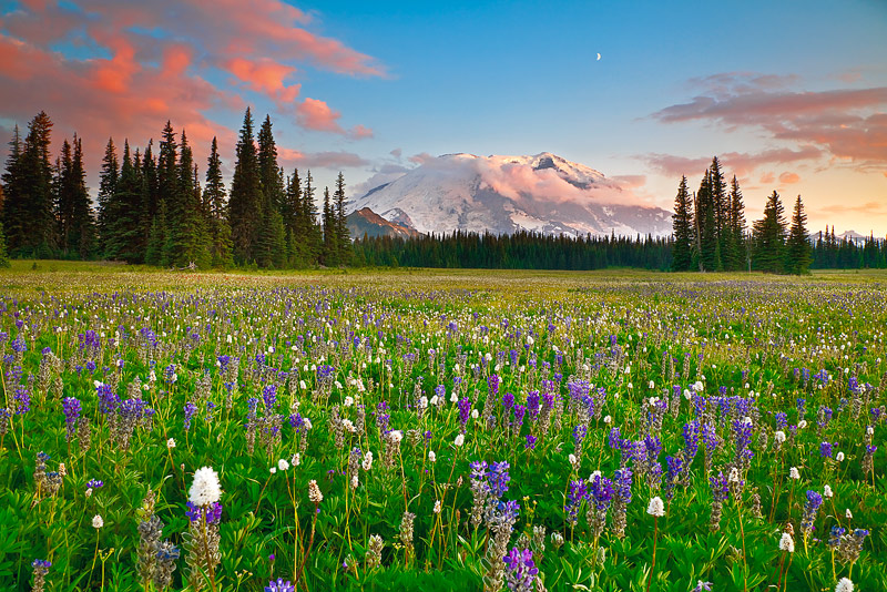 An incredible sunset on Mount Rainier with a proliferation of wildflowers in an area called Grand Park. This is a difficult area...