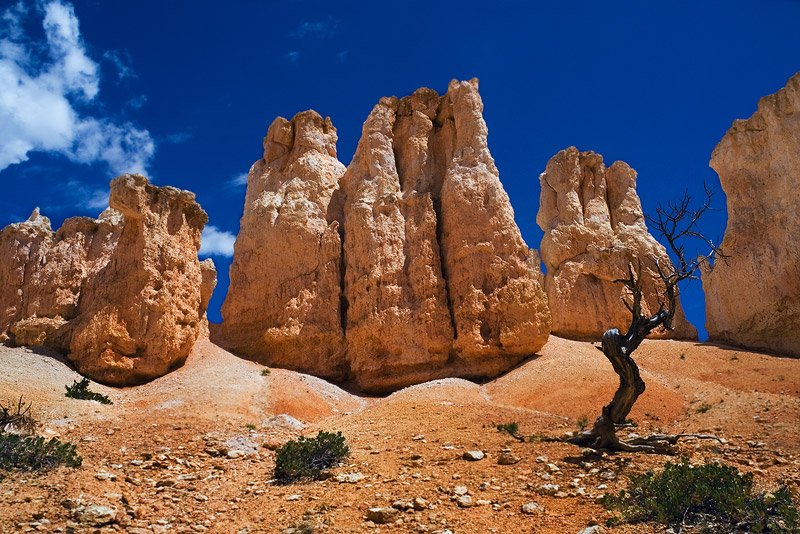 Set against magnificent blue skies, asmall, wind swept tree distinguishes the scene of eroded sandstone hoodoos sitting...