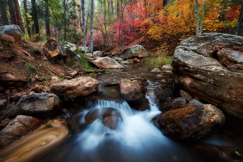 The tranquil forest near Horton Springs comes explodes with color for a short time in the fall. With each passing year the dynamic...