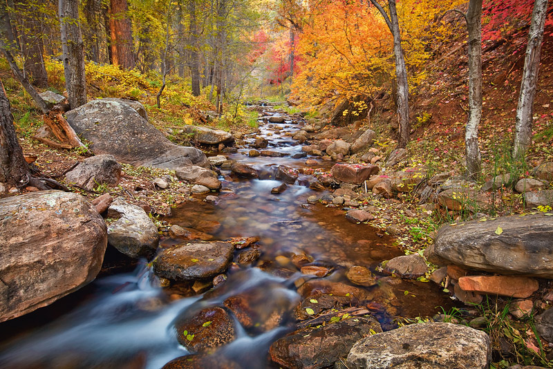 Fading light illuminates an area of prolific fallfoliage in the depths of Horton Creek, a spring fed oasis located in the...