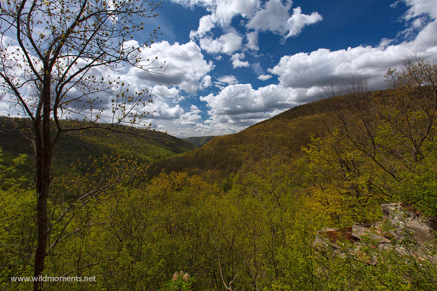 A picture perfect view taken near the Loyalsock trail overlooking Kettle Creek Wild Area in northeastern Pennsylvania on a beautiful...