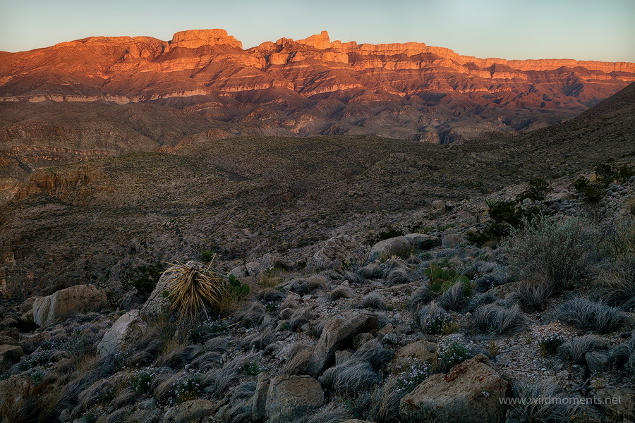 This is last light on the Sierra Del Carmen taken above my camp at Split Rock approximately 6.5 miles into the backcountry just...