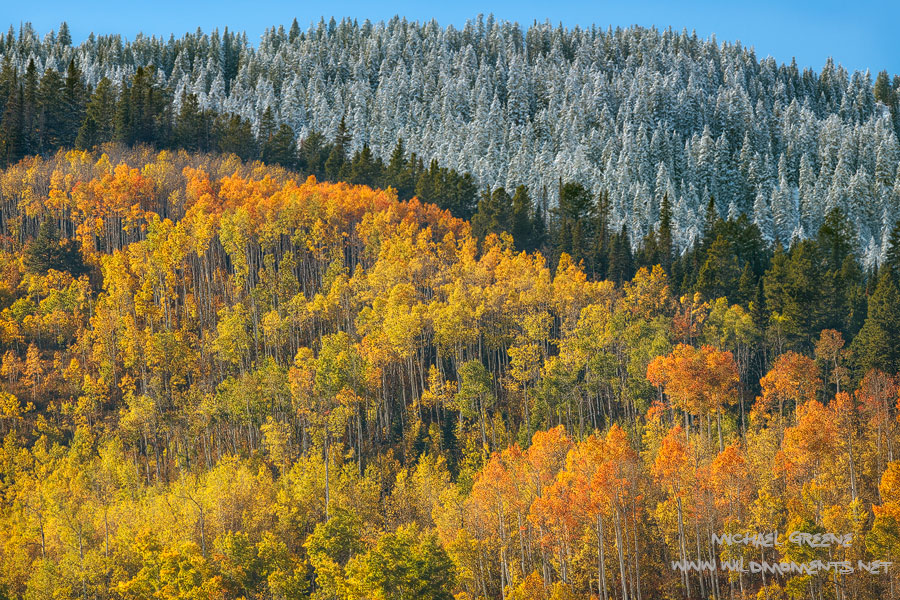 Vibrant fall foliage, sunshine, blue skies, and frozen conifers form an abstract image that is unmistakably Colorado.