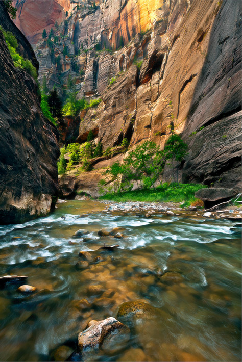 Mysterious walls of color and trees captivate your imagination on a grand scale while hiking in the Zion Narrows.