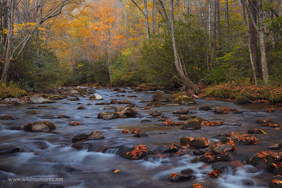 The fading colors of autumn on Bradley Fork are on display here at nightfall near the Smokemont Campground in Great Smoky Mountains...
