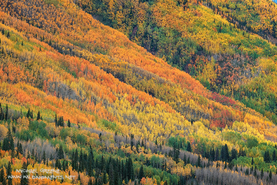 Peak fall colors captured on a stormy day on Red Mountain Pass.