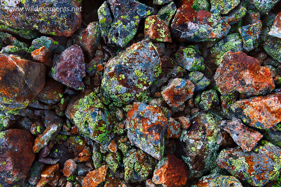 You are looking at what is probably the most prolific and colorful rock display that I've personally seen. I am not sure if it...