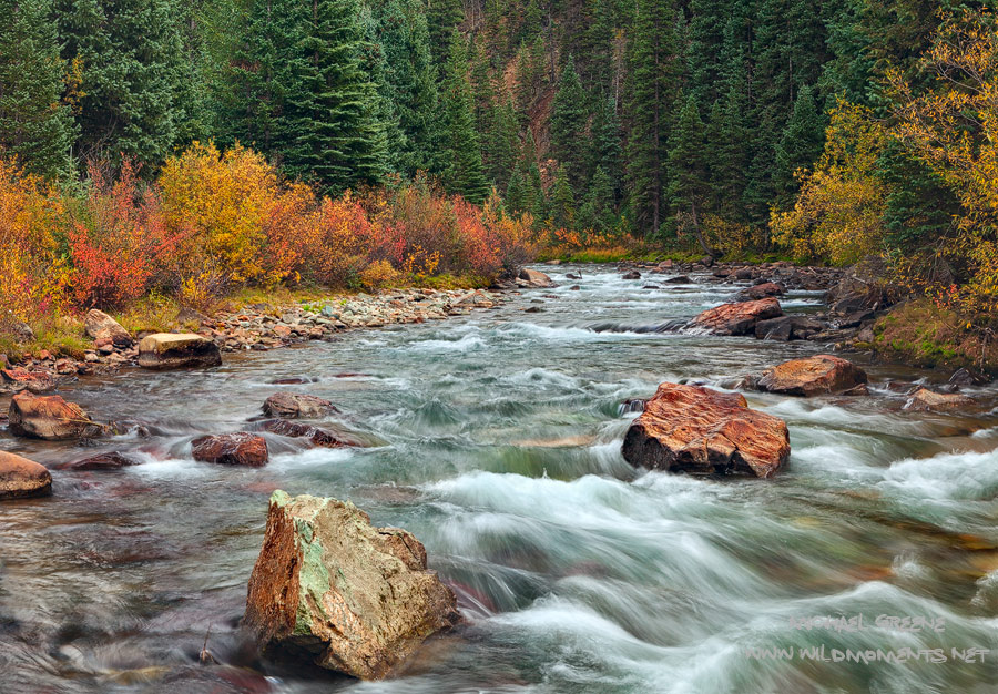 Dynamic eye level foliage decorate the banks of the mighty Animas River outside of Silverton, CO.