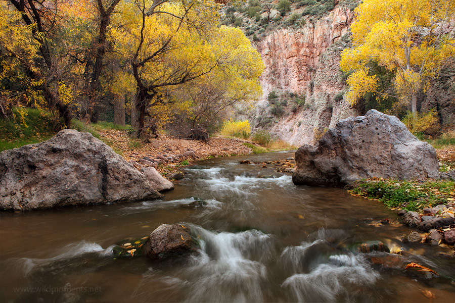 Boulders and golden foliage compliment the low rising, pink canyon walls in this autumn scene from Aravaipa Canyon.