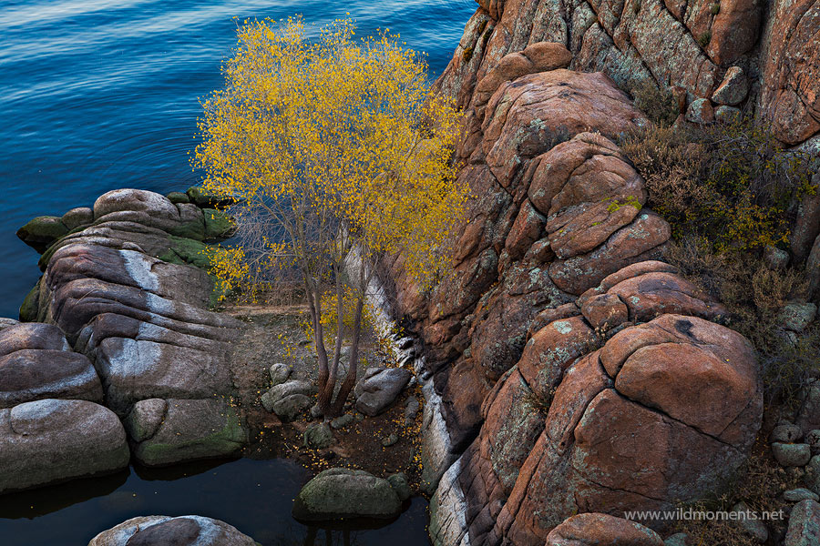 I noticed this solitary aspen tree nestled amongst the granite dells while waiting to photograph sunset over Watson Lake during...